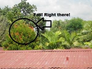 Fall in the Tropics!